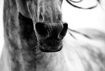 Horse details