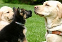 """The Seeing Eye / Jackie's song """"You're Here For Me"""" was written about The Seeing Eye organization.  """"The Seeing Eye, Inc. is the oldest existing guide dog school in the world. """""""