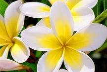 flowers galore / by Karen Caputo