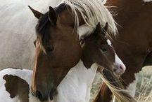 horse love <3 / by Esther Stewart