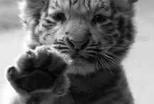Cute Animals / by //