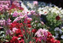 Fleurs & plantes // Flowers & plants