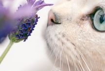I love the smell of Lavender / Lavender No repin limits here. Take as many as you'd like.  / by Nelleke