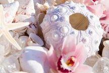 Sea, shells