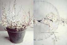 Still lifes / Still life photography
