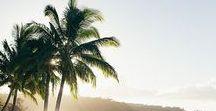 * Palm Trees *