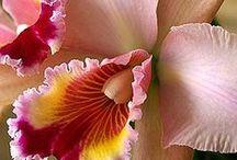 Fauna y Flora Venezolana / by ♥ Susana Rendon Lanz ♥