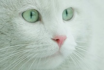 Cats/Felines/Meow/Los Gatos  / by Mary Vaskus