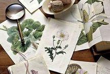Botanical / by Gardenista