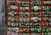 Vertical Gardens / by Gardenista