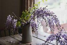 Wisteria / by Gardenista