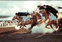 Horse Morocco