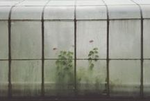 Greenhouses / by Gardenista