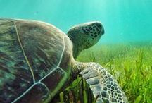 Turtles / Witnessing the nesting and hatching of a rare animal that may live for 200 years is a unique Queensland natural encounter you won't soon forget.