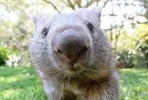 Animals with Attitude / The funniest animals from Queensland and beyond!