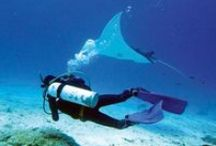 Manta Rays / The Manta Rays of Queensland waters.