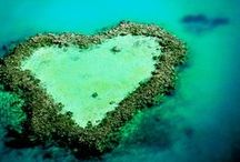 Honeymoons / Spend your honeymoon in one of the most romantic places on earth- The Sunshine State!