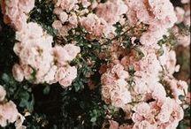 florals + foliage