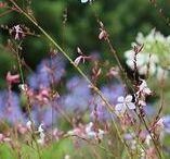 Garden Flower Favorites
