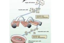 Speciale / In vitro kød_Niles Oksbjerg