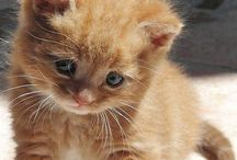 Animals / For our furry friends