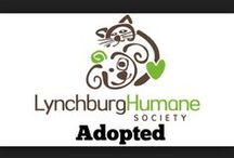 They Found Happiness! / Pets that have been adopted!