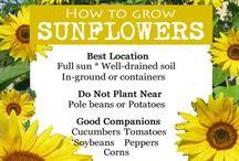 Diverse trädgårds tips