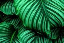 *Green
