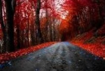 The road less travelled / by Lesa Bolman