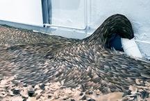 esculturas plumas