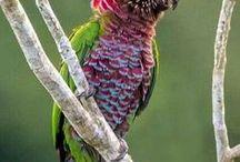 BIRDS, PAJAROS