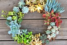 Succulents Cacti / by Laura Plyler @ TheQueenofBooks