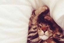 Graciösa katter