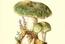 fauna i flora ilustracje