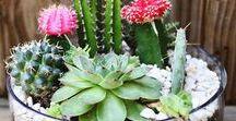 Egonoticias Flores, Jardins, Hortas, Frutas, Legumes e Terrarios