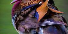 Egonoticias Pássaros