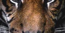 Egonoticias Tigre