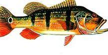 Egonoticias Especies de Peixes