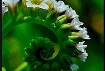 """Natureza / """"Repare na natureza: trabalha continuamente, mas em silêncio"""" (Mahatma Ghandi) / by RosA✿⊱╮✿⊱╮✿⊱╮✿⊱╮✿⊱╮✿⊱╮✿⊱╮ MonteirO ✿⊱╮✿⊱╮✿⊱╮✿⊱╮✿⊱╮✿⊱╮✿⊱╮"""