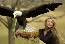 Eagles And Falcons