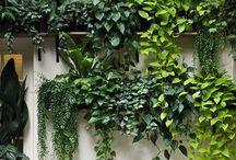 Green green / by Paola Sanchez