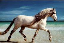 Horses! <3 / horses, horses and more horses!