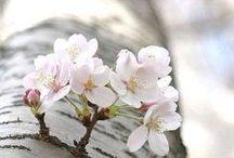 printemps + spring + repérages / Le printemps ce renouveau qui prépare l'été et nous rends instantanément de bonne humeur.