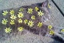 Cicák/Cats