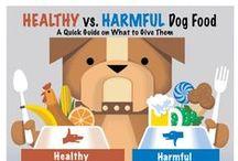 Dog feeding and nutrition