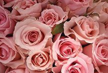 All things Rose