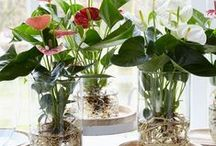 Houseplants..Love, Love, Love! / Let's just say I have a few...Can never have too many in my home.