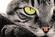 Felines of All Sizes / by Judith G Scott