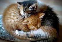 Felines...Love