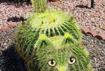 Cactus&Succulent / Flowers